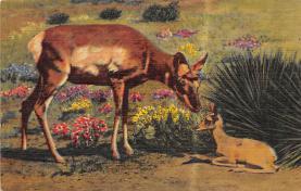 top005239 - Deer Post Card