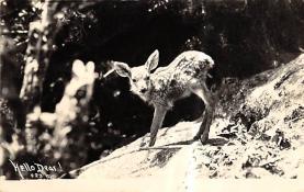 top005255 - Deer Post Card