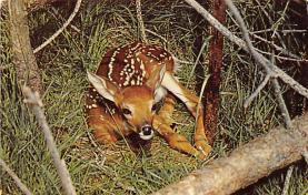 top005259 - Deer Post Card