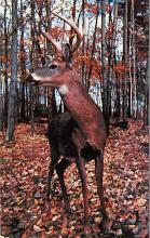 top005263 - Deer Post Card