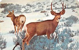 top005265 - Deer Post Card