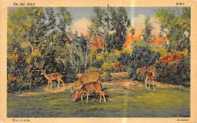 top005269 - Deer Post Card
