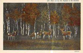 top005271 - Deer Post Card