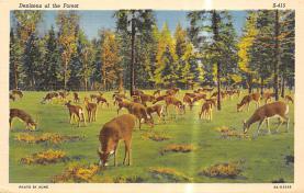 top005279 - Deer Post Card