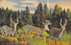 top005285 - Deer Post Card