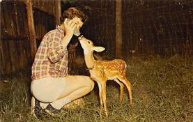 top005287 - Deer Post Card