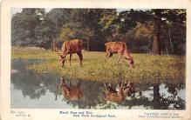 top005289 - Deer Post Card