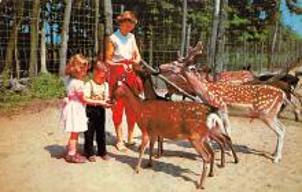 top005291 - Deer Post Card