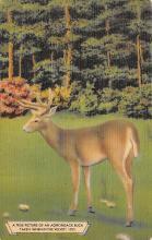 top005293 - Deer Post Card