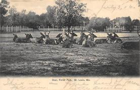 top005295 - Deer Post Card