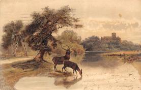 top005297 - Deer Post Card