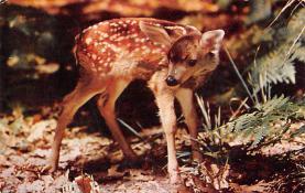 top005299 - Deer Post Card