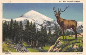 top005301 - Deer Post Card