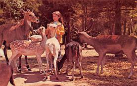 top005309 - Deer Post Card