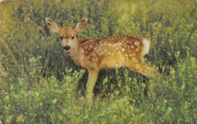 top005311 - Deer Post Card
