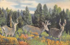 top005313 - Deer Post Card