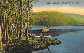 top005315 - Deer Post Card