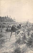 top005317 - Deer Post Card