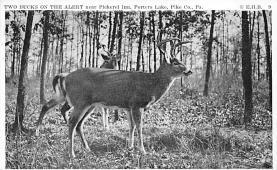 top005319 - Deer Post Card
