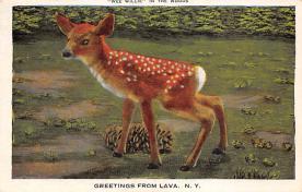 top005323 - Deer Post Card
