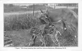 top005325 - Deer Post Card