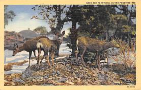 top005329 - Deer Post Card