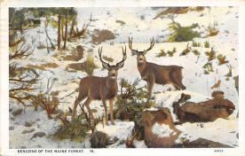 top005331 - Deer Post Card
