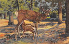 top005333 - Deer Post Card