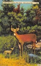 top005335 - Deer Post Card