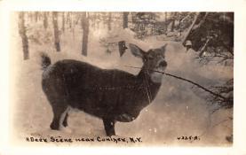 top005337 - Deer Post Card