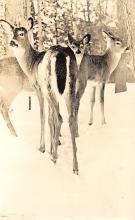 top005341 - Deer Post Card