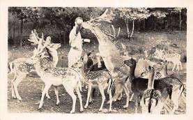 top005343 - Deer Post Card