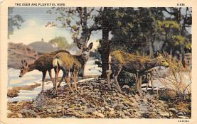 top005345 - Deer Post Card