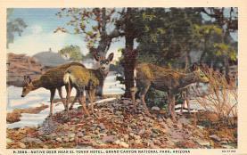 top005347 - Deer Post Card