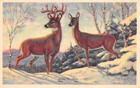 top005349 - Deer Post Card
