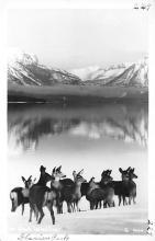 top005351 - Deer Post Card