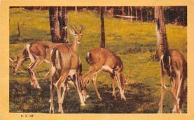top005369 - Deer Post Card