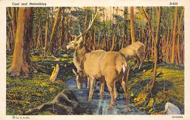 top005371 - Deer Post Card