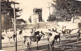 top005385 - Deer Post Card