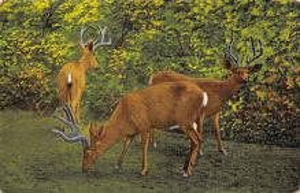 top005387 - Deer Post Card