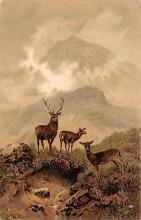 top005389 - Deer Post Card