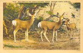 top005391 - Deer Post Card