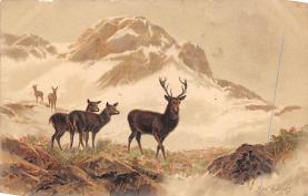 top005395 - Deer Post Card