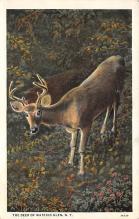 top005399 - Deer Post Card