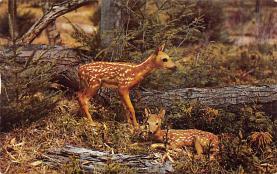 top005403 - Deer Post Card