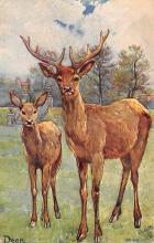 top005409 - Deer Post Card