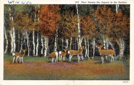 top005415 - Deer Post Card