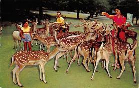 top005419 - Deer Post Card