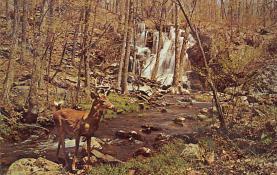 top005423 - Deer Post Card