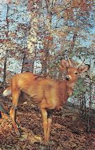 top005425 - Deer Post Card